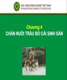 Bài giảng Chương 4: Chăn nuôi trâu bò cái sinh sản