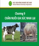 Bài giảng Nhập môn chăn nuôi - Chương 9: Chăn nuôi gia súc nhai lại