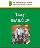 Bài giảng Nhập môn chăn nuôi - Chương 6: Chăn nuôi lợn