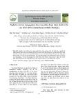 Nghiên cứu tác dụng giảm đau của phân đoạn dịch chiết từ lá cây Khôi Đốm (Sanchezia nobilis Hook.f.)