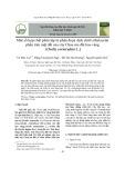 Một số hợp chất phân lập từ phân đoạn dịch chiết ethylacetat phần trên mặt đất của cây Chua me đất hoa vàng (Oxalis corniculata L.)