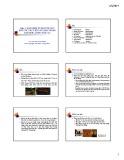 Bài giảng Phần 3: Khái niệm về nguyên liệu ngũ cốc và củ bột sử dụng trong chế biến lương thực (ttt)