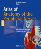 The peripheral nerves on the atlas of anatomy: Part 1