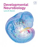 Neurobiology and the developmental: Part 2