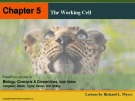 Lecture Biology: Concepts and connections (Sixth edition) – Chapter 5