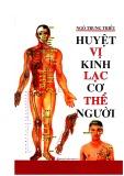 Cơ thể người và các huyệt vị kinh lạc