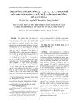 Ảnh hưởng của bìm bìm (Operculia turpethum) thay thế cỏ lông tây trong khẩu phần lên sinh trưởng dê Bách Thảo