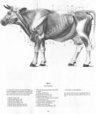 Giáo trình Giải phẫu sinh lý động vật nuôi: Phần 1