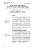 Nghiên cứu ảnh hưởng nồng độ của các thuốc IAA, IBA và NAA tới khả năng tạo rễ và thành phần ruột bầu tới sinh trưởng thông ôcarpa (Pinus oocarpa Schiede Ex Schlechtendal) ở giai đoạn vườn ươm