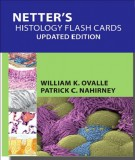 Flash cards of histology: Part 2