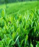 Luận văn: Phân tích dự báo sản lượng chè xuất khẩu tỉnh Thái Nguyên