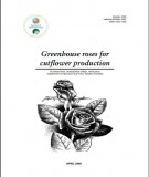 Greenhouse roses for cutflower production