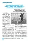 Nghiên cứu khả năng sinh trưởng, phát triển của bê lai F1 (Brahman trắng x lai Zebu) và bê lai F1 (Droughtmaster x lai Zebu) tại Quảng Bình