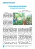 Kết quả nghiên cứu trồng thử nghiệm cây ba kích thước dưới tán cây cao su