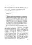 Đánh giá an toàn sinh học của phức hợp MgAl LDH-Anacardic acid trên cây rau cải ngọt (Brassica integrifolia) và chuột