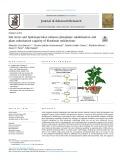 Salt stress and hydroxyectoine enhance phosphate solubilisation and plant colonisation capacity of Kosakonia radicincitans