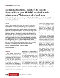 Designing functional markers to identify the candidate gene SRWD2 involved in salt tolerances of Vietnamese rice landraces