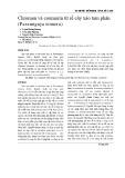 Chromen và coumarin từ rễ cây xáo tam phân (Paramignya trimera)