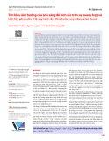 Tìm hiểu ảnh hưởng của ánh sáng đỏ đơn sắc trên sự quang hợp và tích lũy phenolic ở lá cây lưỡi rắn (Hedyotis corymbosa (L.) Lam)