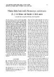Nhận diện loài ruồi Stomoxys calcitrans (L.) và khảo sát hành vi hút máu