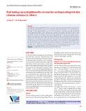 Ảnh hưởng của acid gibberellic và urea lên sự tăng trưởng trái dứa (Ananas comosus (L.) Merr.)