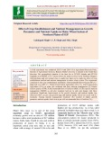 Effect of crop establishment and nutrient management on growth parameter and nutrient uptake in maize wheat system of northern plains of IGP