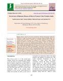 Occurrence of bakanae disease of rice in western Uttar Pradesh, India