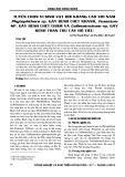 Tuyển chọn vi sinh vật đối kháng cao với nấm Phytophora sp. gây bệnh chết nhanh, Fusarium sp. gây bệnh chết nấm và Colletotrichum sp. gây bệnh thán thư cây hồ tiêu