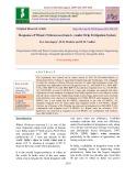 Response of wheat (Triticum aestivum L.) under drip fertigation system