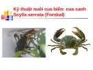 Bài giảng Kỹ thuật nuôi cua biển: Cua xanh Scylla serrata (Forskal)