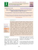 Effect of different pre-sowing seed treatments on growth and seed quality parameters of maize (Zea mays L.)