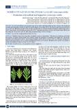 Nghiên cứu sản xuất trà túi lọc lá sa kê (Artocarpus altilis)