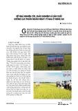 Kết quả nghiên cứu, khảo nghiệm và sản xuất giống lúa thuần ngắn ngày Vt-Na6 ở Nghệ An