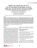 Nghiên cứu chuyển gen tạo rễ tơ cây xáo tam phân (Paramignya trimera) thông qua Agrobacterium rhizogenes K599