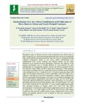 Standardization of in vitro culture establishment and proliferation of micro-shoots in African and French marigold genotypes