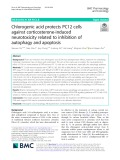 Chlorogenic acid protects PC12 cells against corticosterone-induced neurotoxicity related to inhibition of autophagy and apoptosis