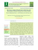 Effectiveness evaluation of bacterial species isolated from soil in bioremediation of diazinon, pirimicarb and atrazine pesticides
