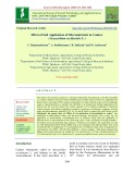 Effect of soil application of micronutrients in cashew (Anacardium occidentale L.)