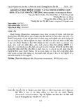 Khảo sát đặc điểm vi học và tác dụng chống oxy hóa của cây thuốc thượng (Phaeanthus vietnamensis Ban)