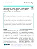 Rejuvenation of chicory and lettuce plants following phase change in tissue culture