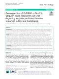 Overexpression of OsPUB41, a Rice E3 ubiquitin ligase induced by cell wall degrading enzymes, enhances immune responses in rice and arabidopsis