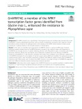 GmWRKY40, a member of the WRKY transcription factor genes identified from Glycine max L., enhanced the resistance to Phytophthora sojae