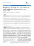 Morphology and ploidy level determination of Pteris vittata callus during induction and regeneration