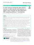 A novel sucrose transporter gene IbSUT4 involves in plant growth and response to abiotic stress through the ABF-dependent ABA signaling pathway in Sweetpotato