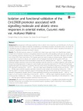 Isolation and functional validation of the CmLOX08 promoter associated with signalling molecule and abiotic stress responses in oriental melon, Cucumis melo var. makuwa Makino