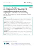 Identification of a SiCL1 gene controlling leaf curling and capsule indehiscence in sesame via cross-population association mapping and genomic variants screening