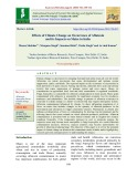 Effects of climate change on occurrence of aflatoxin and its impacts on maize in India
