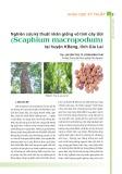 Nghiên cứu kỹ thuật nhân giống vô tính cây Ươi (Scaphium macropodum) tại huyện KBang, tỉnh Gia Lai