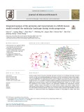 Integrated analysis of the proteome and transcriptome in a MCAO mouse model revealed the molecular landscape during stroke progression