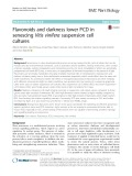 Flavonoids and darkness lower PCD in senescing Vitis vinifera suspension cell cultures